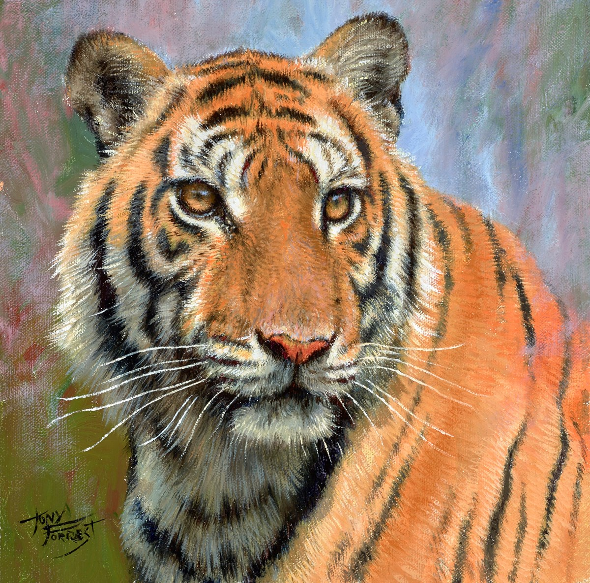 Tiger Portrait I by tony forrest -  sized 10x10 inches. Available from Whitewall Galleries